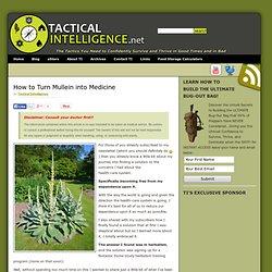 Medicinal Plants: Mullein