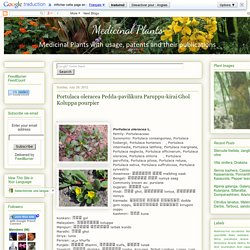 Medicinal Plants: Portulaca oleracea Pedda-pavilikura Paruppu-kirai Ghol Koluppa pourpier