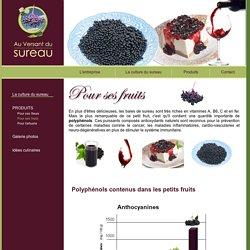 Sureau - Plante médicinale. Jus de sureau - Baies de sureau - Antiviral naturel.