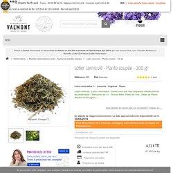 Lotier cornicule - Plante coupée - Plante médicinale en Herboristerie