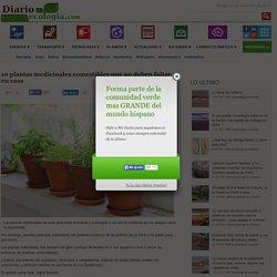 Noticias de ecologia y medio ambiente10 plantas medicinales comestibles que no deben faltar en casa