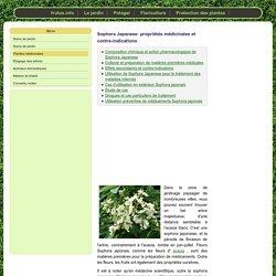 Sophora Japanese: propriétés médicinales et contre-indications