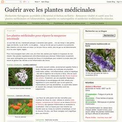 Guérir avec les plantes médicinales: Les plantes médicinales pour réparer la muqueuse intestinale