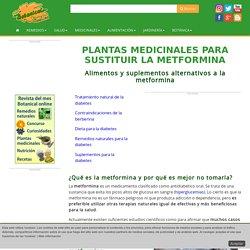 Plantas medicinales para sustituir la metformina