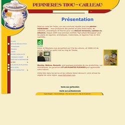 Pépinières TIJOU - Cailleau : Plantes médicinales Plantes aromatiques - Tisanes : présentation
