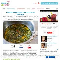 Plantes médicinales pour purifier le pancréas