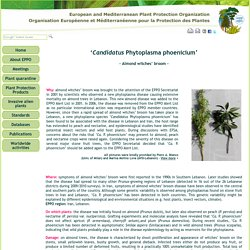 OEPP - 2015 - 'Candidatus Phytoplasma phoenicium' - Almond witches' broom