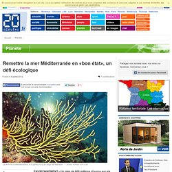 Remettre la mer Méditerranée en «bon état», un défi écologique