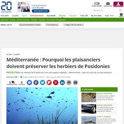 Méditerranée : Pourquoi les plaisanciers doivent préserver les herbiers de Posidonies 8 juillet 2020