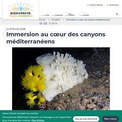 Immersion au cœur des canyons méditerranéens