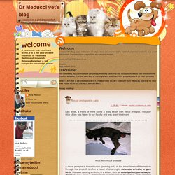 Dr Meducci vet's blog: Rectal prolapse in cats