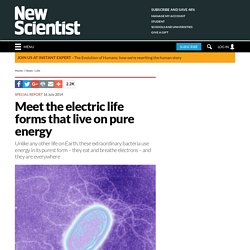 Meet the electric life forms that live on pure energy
