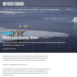 Meet the Grolar Bear - Pacific Standard