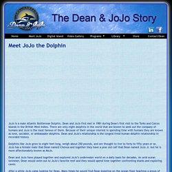Meet JoJo the Dolphin - The Dean & JoJo Story