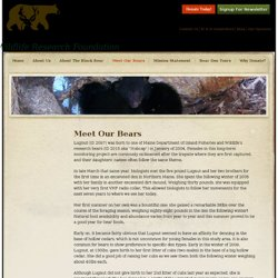 » Meet Our Bears » Wildlife Research Foundation