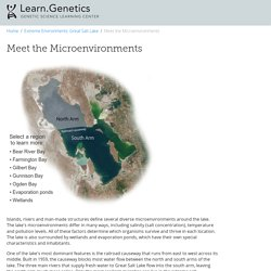 Meet the Microenvironments