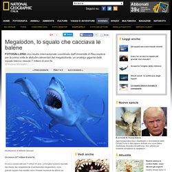 Foto Megalodon, lo squalo che cacciava le balene - 1 di 5