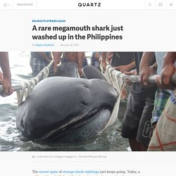 A rare megamouth shark just washed up in the Philippines