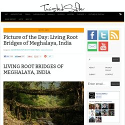 Living Root Bridges of Meghalaya, India