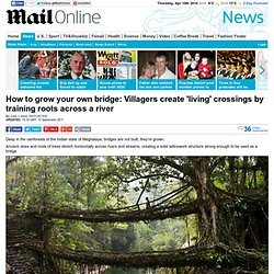 Bridges that GROW themselves out of tropical roots and vines crossing rivers