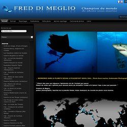 Fred DI MEGLIO,photo sous-marine,image sous-marine,UW photo,underwater photo