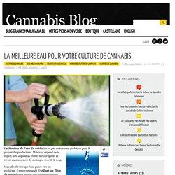 La meilleure eau pour votre culture de cannabis