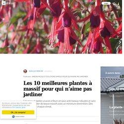 Les 10 meilleures plantes à massif pour qui n'aime pas jardiner