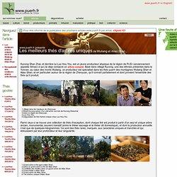 Les meilleurs thés d'arbres uniques 2012 de Wuliang Shan et Ailao Shan
