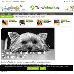 Cuál es el mejor pienso para mi Yorkshire Terrier