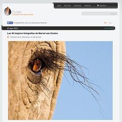 Marsel van Oosten. Fotógrafo de la naturaleza y la vida salvaje