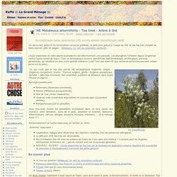 HE Melaleuca alternifolia - Tea tree - Arbre à thé