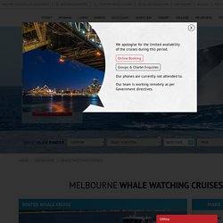 Melbourne Whale Watching Cruises