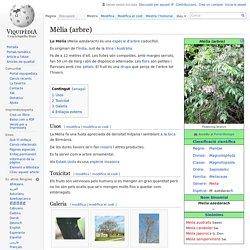 Mèlia (arbre)