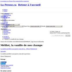 01-5143815-melilot-la-vanille-de-nos-champs