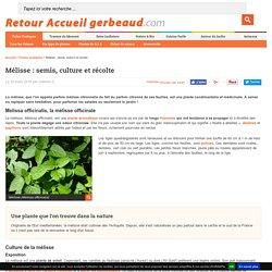 Mélisse : semis, culture et récolte