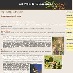 Cévennes, flore mellifère, plantes mellifères, abeille, apiculture, botanique