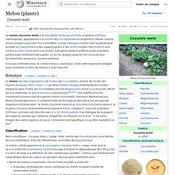 Melon (plante)