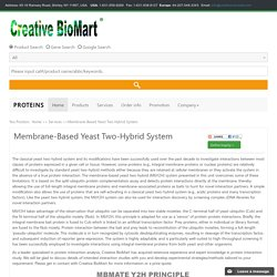 Membrane-Based Yeast Two-Hybrid System -Creative BioMart