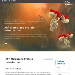 APP Membrane Protein Introduction