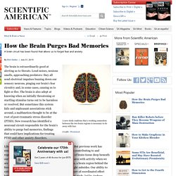 How the Brain Purges Bad Memories