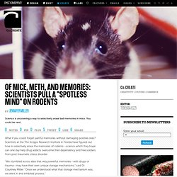 "Of Mice, Meth, And Memories: Scientists Pull A ""Spotless Mind"" On Rodents"