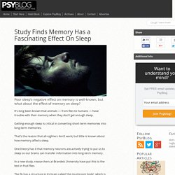 Study Finds Memory Has a Fascinating Effect On Sleep - PsyBlog
