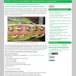 Bahan & Cara Menanam Bawang Merah Secara Hidroponik di Rumah
