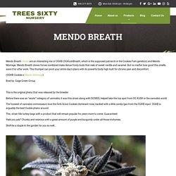 MENDO BREATH - Trees Sixty Nursery