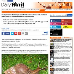 DAILY MAIL 03/08/12 Deadly invasion: Battle rages to rid Florida of tens of thousands of African snails which are infested with a brain-swelling worm