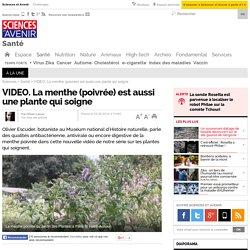 VIDEO. La menthe (poivrée) est aussi une plante qui soigne