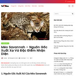 Mèo Savannah - Nguồn Gốc Xuất Xứ Và Đặc Điểm Nhận Diện