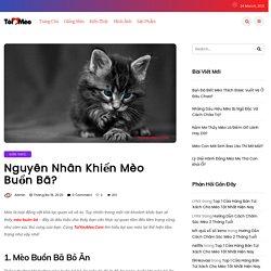 Mèo Buồn Bã Vì Lý Do Gì? Tìm Hiểu Ngay Cùng ToiYeuMeo.Com