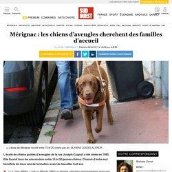 Mérignac: les chiens d'aveugles cherchent des familles d'accueil