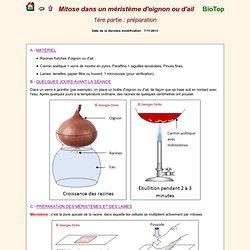 Mitose méristème division cellulaire